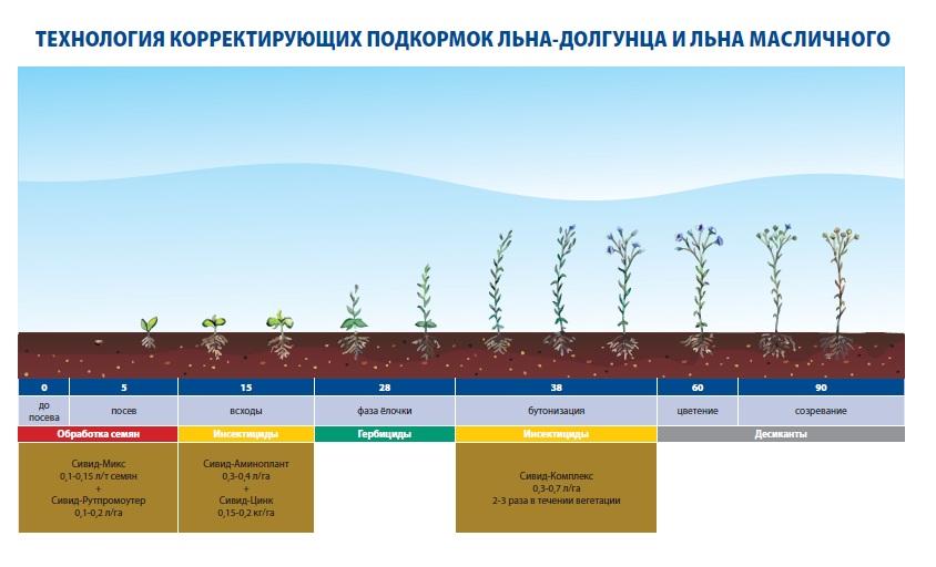 Технологии корректирущих подкормок льна-долгунца и льна-масличного - Росагрохим